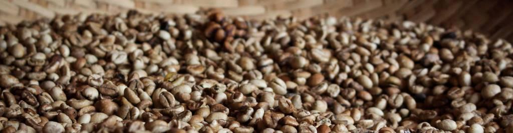 History - Guyana Rainforest Coffee