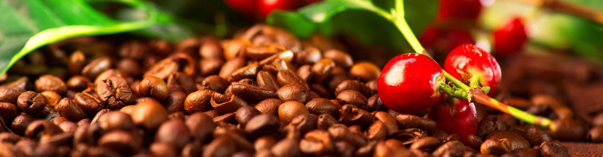 Shop - Guyana Rainforest Coffee